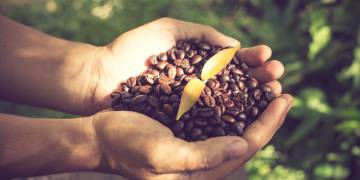 Coffee Beans: Arabica vs Robusta