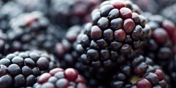 Ingredient Insight: Blackberry